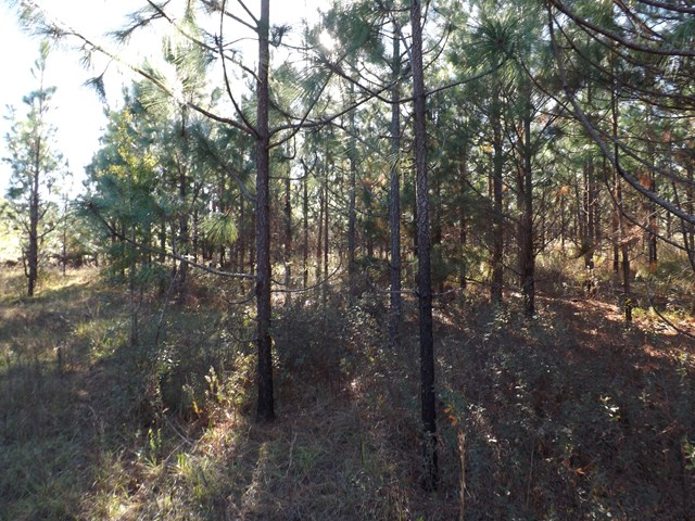 00 Co Rd 184 (Great Northern Rd), Shorterville, AL, 36373 Photo 1